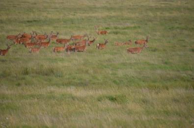 2108-daniel-deer-4
