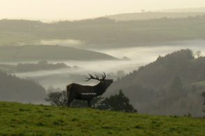 2108-graham-floyd-misty-morning-call-above-the-exe-valley