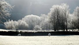 2108-julia-amies-green-winter-whites-a-hard-frost-along-the-exe-valley