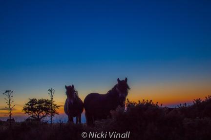 2108-nicki-vinall-exmoor-ponies-at-sunset-above-porlock-weir