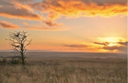 aw-photographic-view-from-molland-common
