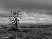 jo-hackman-black-and-white-exmoor