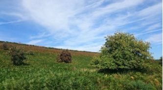 nickthornedesign-summer-walk-up-withycombe-hill