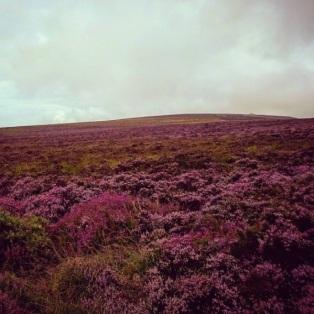 nickthornedesign-top-of-dunkery-beacon-heather