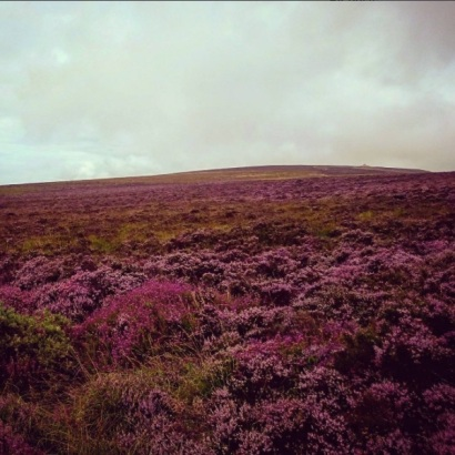 nickthornedesign-top-of-dunkery-beacon-heather