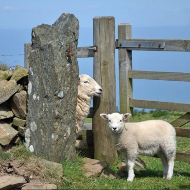picsbyrap-escapees-at-the-top-of-lynmouth-hill