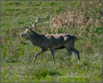 203-mike-watson-stag