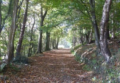 204-alan-mccarten-hollerday-hill-lynton