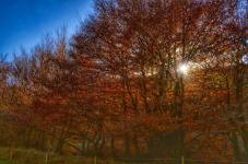 205-linda-thompson-last-of-the-sunlight-for-the-day-through-the-autumn-trees-on-exmoor