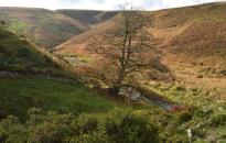 206-richard-williams-the-winding-river-barle-at-wheal-eliza