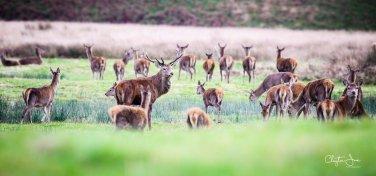 213-clayton-jane-red-deer