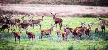 214-clayton-jane-red-deer
