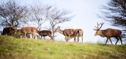 215-clayton-jane-red-deer