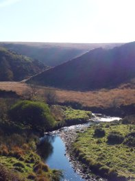 216-bert-bruins-overlooking-the-river-barle-in-todays-fantastic-clear-light