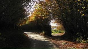 221-emma-daniel-beech-hedge-lane-near-exford