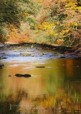 230-julia-amies-green-the-beautiful-river-barle