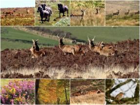 231-leslie-smith-exmoor-diary-2016