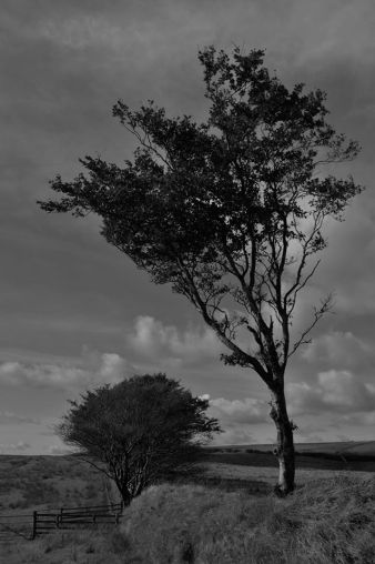 234-richard-williams-near-rockleyexmoor
