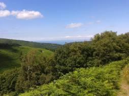 241-mandy-stribling-circular-walk-on-exmoor-in-horner-wood