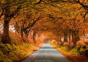 302-john-spurr-autumn-leaves-on-exmoor-lane