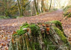303-julia-amies-green-a-tree-stump-plays-host-to-a-selection-of-pretty-mushrooms-along-the-barle-valley