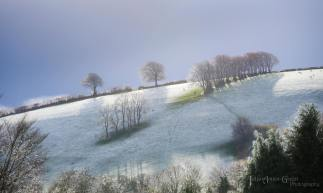 309-julia-amies-green-beautiful-light-after-this-mornings-first-flurry-of-snowfall
