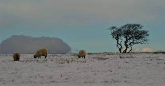 311-richard-williams-first-snow-on-exmoor-in-november