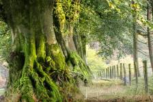 501-julia-amies-green-i-am-forever-drawn-to-these-majestic-ancient-beeches