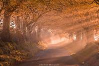 601-john-spurr-autumn-light-on-an-exmoor-lane