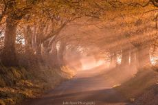 601-john-spurr-autumn-light-on-an-exmoor-lane