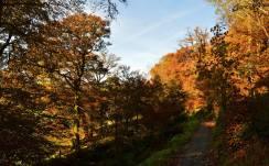 801-richard-williams-on-the-golden-trail-in-simonsbath