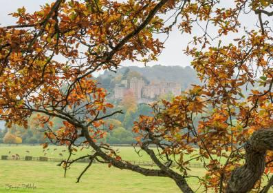 804-simon-dibble-dunster-castle-30-oct-afternoon