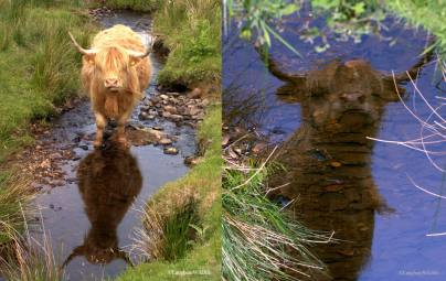 810-jochen-langbein-reflections-on-exmoor-%22mirror-mirror-on-the-moor-who-is-the-moodiest-%22