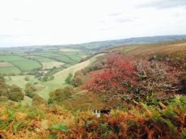 812-emma-daniel-punchbowl-last-autumn