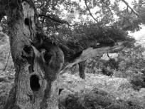 826-emma-daniel-exmoor-tree