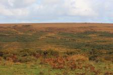 832-jacqueline-wharton-the-anchor-exmoor-ponies-return-to-the-moor-after-the-annual-gathering