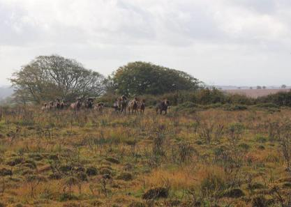 833-jacqueline-wharton-the-anchor-exmoor-ponies-return-to-the-moor-after-the-annual-gathering