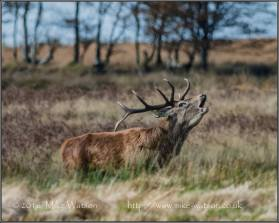 841-mike-watson-today-on-exmoor-21102016-at-exmoor-national-park
