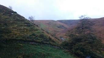 842-ann-illing-autumn-on-exmoor