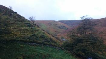 842-ann-illing-autumn-on-exmoor