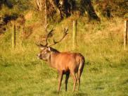 843-andrew-worth-exmoor-stag