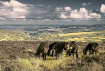 844-roin-baker-ponies-overlooking-blue-anchor-bay
