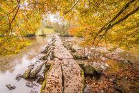 900-john-spurr-autumn-leaves-falling-at-tarr-steps-taken-28-oct