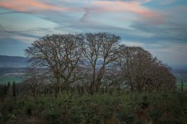 202-forest-beginnings-image-captured-while-doing-a-portrait-shoot-at-wilmot-hill-on-exmoor-www-rgw-photography-co-uk