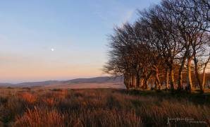 303-julia-amies-green-the-very-last-few-moments-of-the-evening-sun-on-the-moor