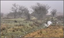 309-mike-watson-misty-moisty-morning-on-exmoor-11th-dec-2016