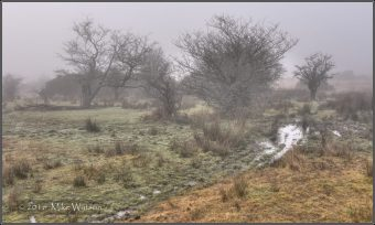 309-mike-watson-misty-moisty-morning-on-exmoor-11th-dec-2016