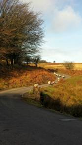 403-pauly-allen-family-road-trip-over-exmoor-today