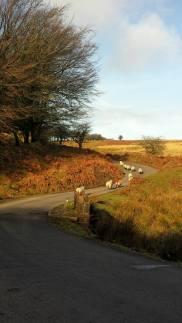 403-pauly-allen-family-road-trip-over-exmoor-today