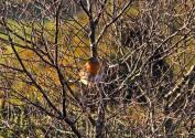 411-peter-mather-robin